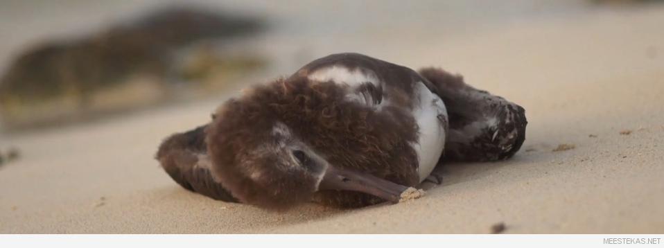 Lind plastiktaara, prügi ei sobi loodusesse