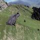 WTF? (video)