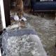 Koer korraldab diivanipatjadele veresauna, muudab terve maja talve võlumaaks
