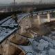 Nõrganärvilistele ei soovita: staadioni lammutamisel juhtus karm õnnetus