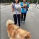 Mitu korda videot vaatasid, enne kui koera märkasid?